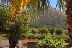 Uitzicht vanuit Tuin
