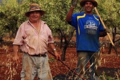Onze Buurmannen aan het werk in de Amandelboomgaard
